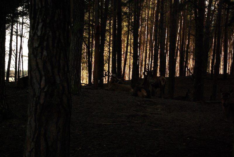 berlin-brandenburg-wildpark-schorfheide-19