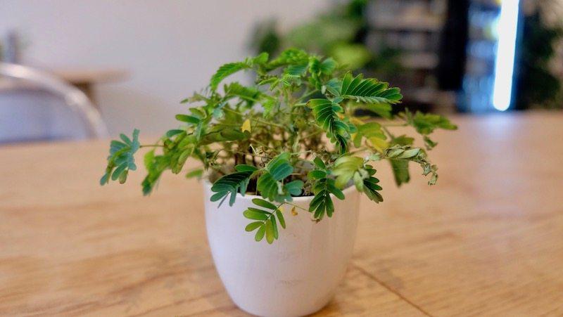 berlin-restaurant-fechtner-salatbar-pflanze