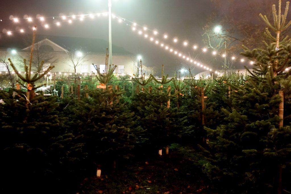 berlin-weihnachtsmarkt-spaethsche-baumschulen-tannenba%cc%88ume