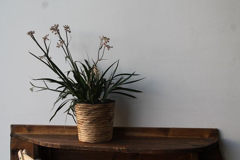 Pflanze, Wand